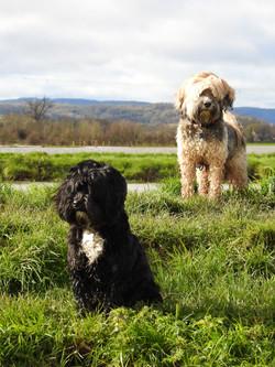 Lets Walk Dogs - Taunton dog walker 70