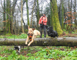 Lets Walk Dogs - Taunton dog walker 59