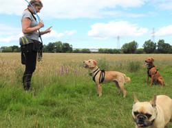 Lets Walk Dogs - Taunton dog walker 137.