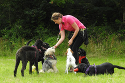 Lets Walk Dogs - Taunton dog walker 104.