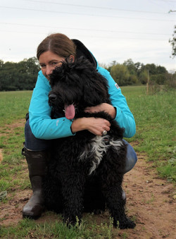 Newfypoo with dog walker in Monkton Heathfield