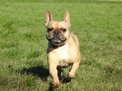 Lets Walk Dogs - Taunton dog walker 85