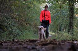 Local dog walker in Ruishton woods walking a white cockerpoo