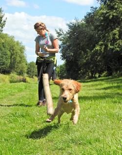 Lets Walk Dogs - Taunton dog walker 90