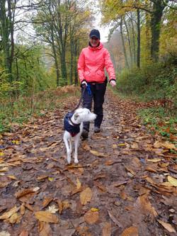 Dog walker in the woods in Taunton, Somerset