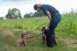 Lets Walk Dogs - Taunton dog walker 109.