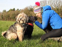 Tibetan Terriers on a dog walk in Somerset