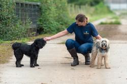 Dog walking with Two Tibetan Terriers in Taunton