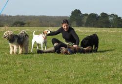 Lets Walk Dogs - Taunton dog walker 62