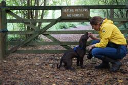 Lets Walk Dogs - Taunton dog walker 69