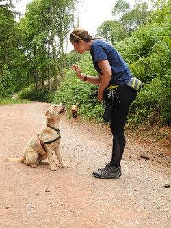 Professional dog walker from Taunton training her dog to sit
