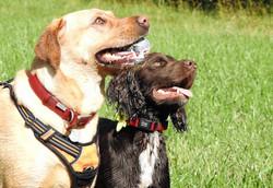 Lets Walk Dogs - Taunton dog walker 44