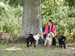 Group of dogs with their dog walker under a tree in Cheddon Fitzpaine, Taunton, Somerset