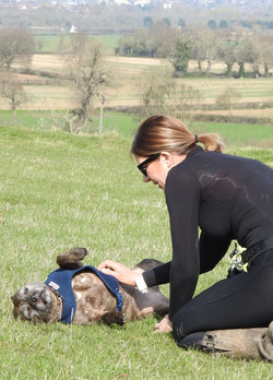 Dog laying on his back while his dog walker plays with him on the Somerset levels in Taunton