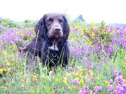 Lets Walk Dogs - Taunton dog walker 61
