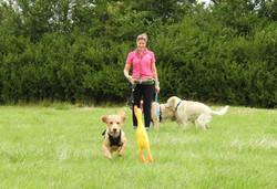 Lets Walk Dogs - Taunton dog walker 83