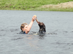 Dog swimming in a lake with his dog walker from Taunton