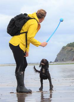 Taunton dog walker on the beach with a brown Sprocker spaniel