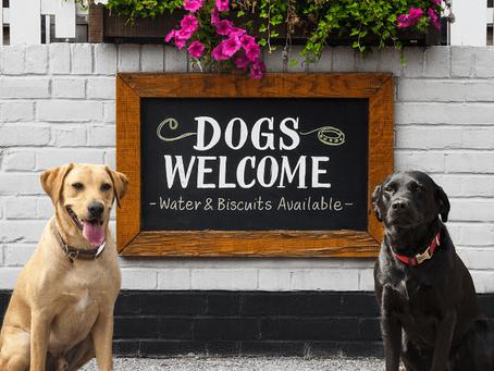Dog Friendly Pubs & Restaurants in Taunton, Somerset.