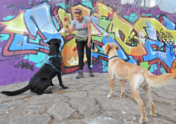 Lets Walk Dogs in Taunton with 2 Labradors stood next to a graffiti wall