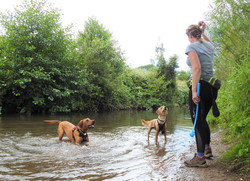 Lets Walk Dogs - Taunton dog walker 115.