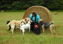 Local dog walker from Taunton playing with her dogs next to a hay bale