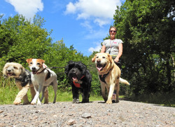 Professional dog walker from Taunton, walking 4 dogs on lead
