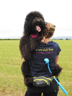 Lets Walk Dogs - Taunton dog walker 80