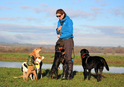 Adventure walks with Lets walk dogs in Taunton