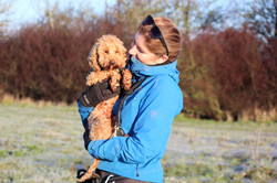 Dog walker holding a toy poodle in Taunton
