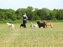 Lets Walk Dogs - Taunton dog walker 92