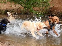 Lets Walk Dogs - Taunton dog walker 110.
