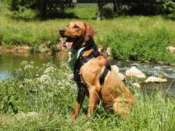 Lets Walk Dogs - Taunton dog walker 89