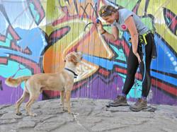 Lets Walk Dogs - Taunton dog walker 75