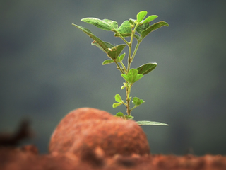 How to Grow Your Business from Surviving to Thriving