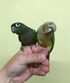 Kiwi & Kola