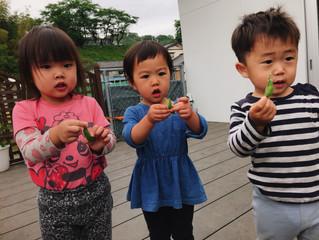 育てたお野菜で育つ子どもたち