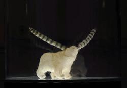 Ours blanc G modifié, 2010