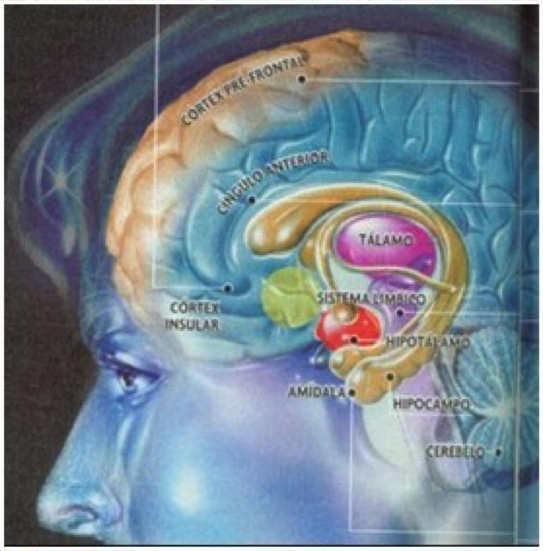 cerebro colorido