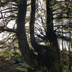 L'arbre…