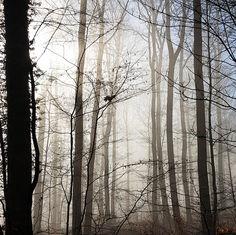 La forêt… Et Vous…