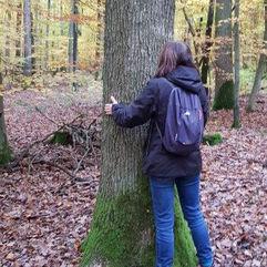 Les arbres et vous…