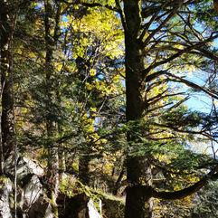 La Forêt, les Arbres…