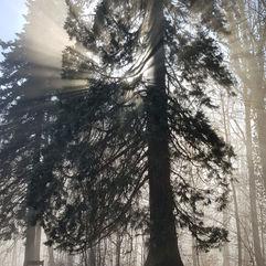 La forces des arbres…