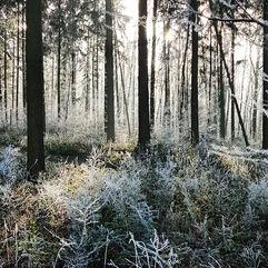 La forêt en hiver…