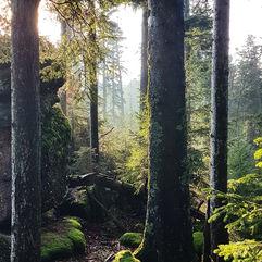La forêt et ses vertus…