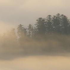 La Forêt …