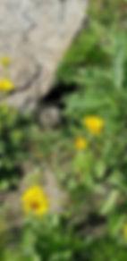 Lapin_detente_forêt.jpg
