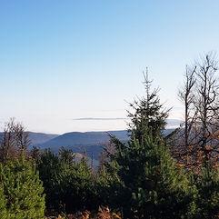 La forêt…
