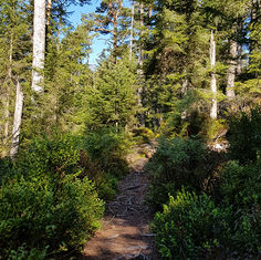 Sentier forestier…